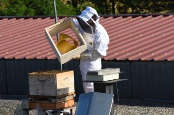 Installation de l'anneau de Moebius dans la ruche expérimentale