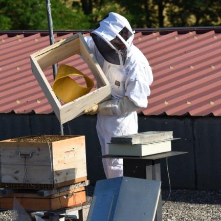 installation-de-lanneau-de-moebius-dans-la-ruche-expc3a9rimentale
